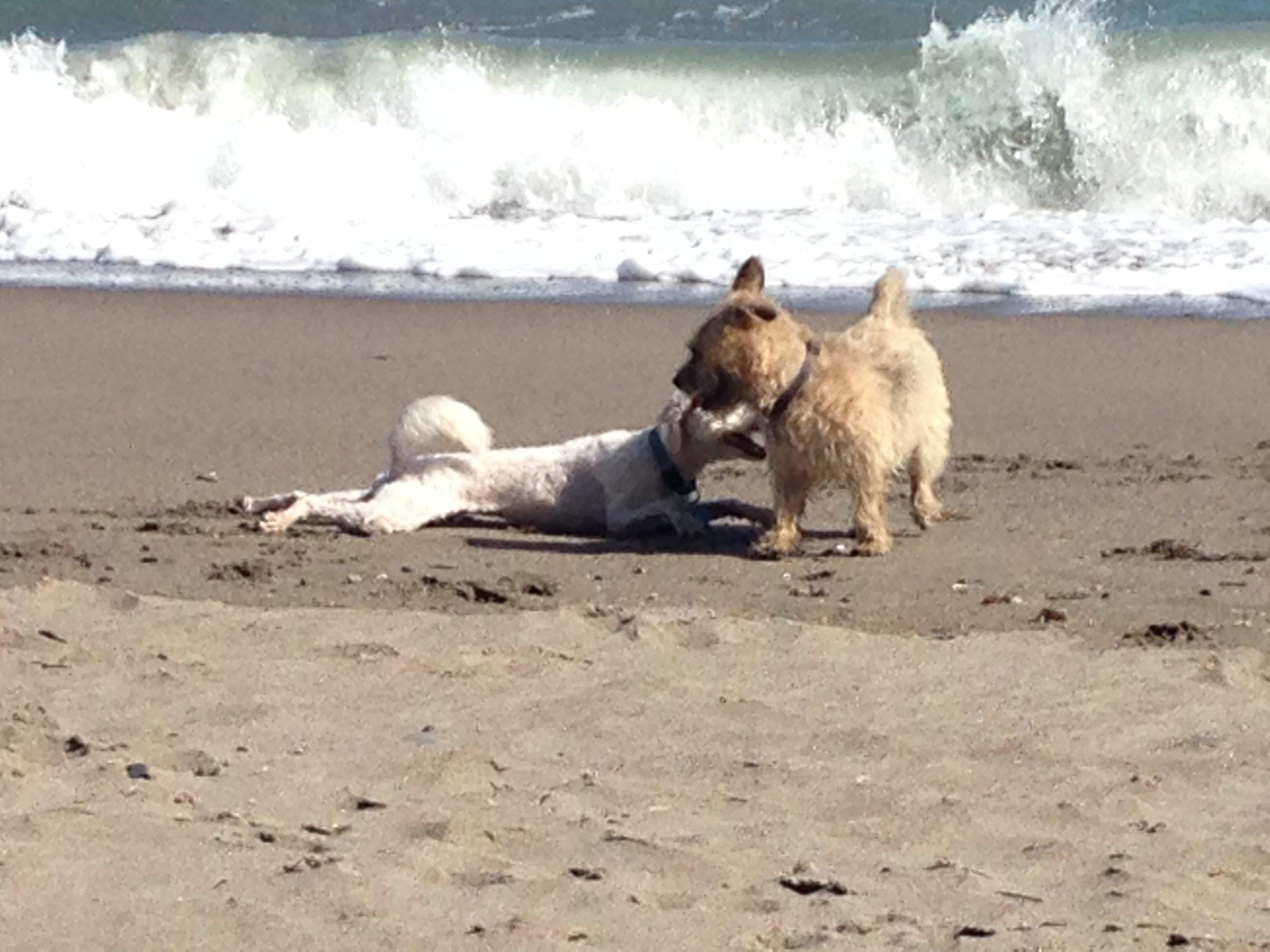 Hunde am Strand - Parasiten und Schädlinge mit Neemöl bekämpfen