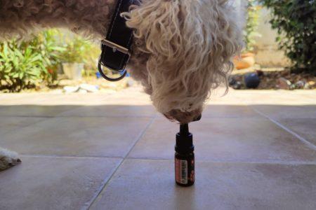 Hunde mit CBD Öl